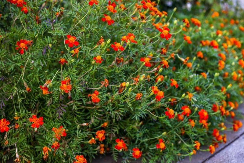 Beautiful summer flower. Macro shot. Summer royalty free stock photo