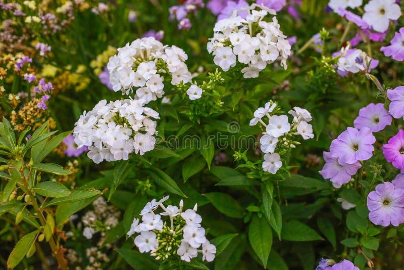 Beautiful summer flower. Macro shot. Summer stock photo