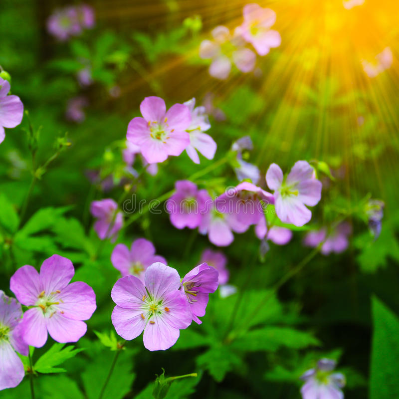 Beautiful summer flowers with green background royalty free stock image