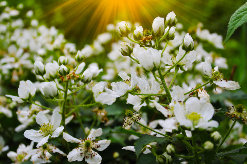 Beautiful summer flowers with green background stock images