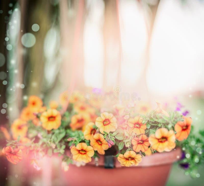 Beautiful summer flowers in pot over outdoor summer garden background, outdoor royalty free stock images