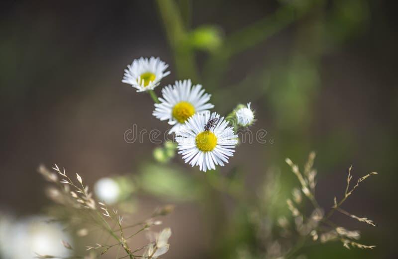 Beautiful summer flowers, wild nature, countryside stock photos