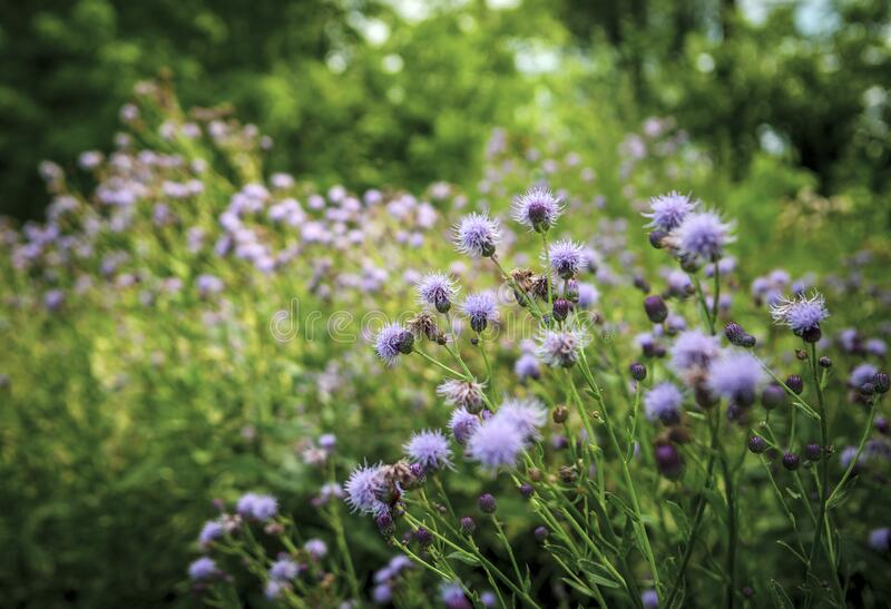 Beautiful summer flowers, wild nature, countryside stock image