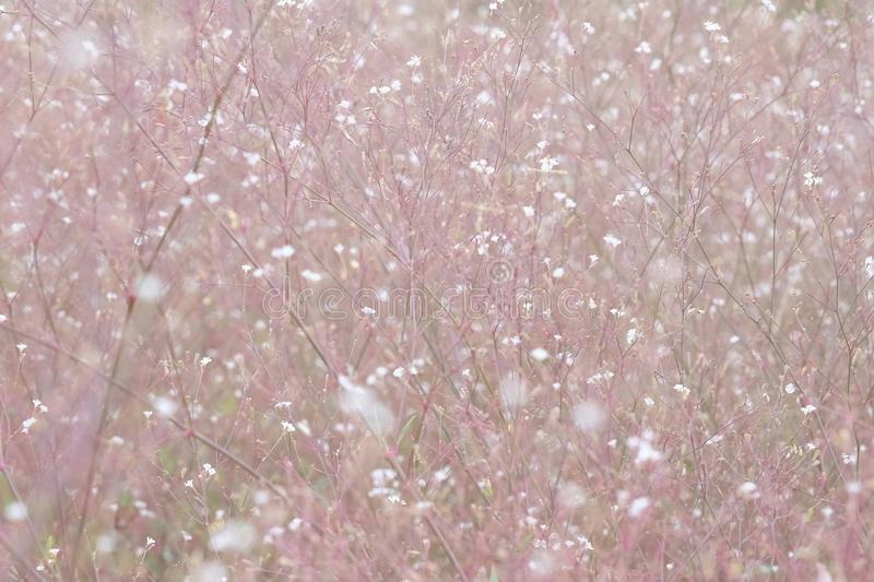 Beautiful summer grass flowers. In soft focus royalty free stock photos