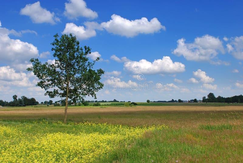 Beautiful summer landscape stock photos