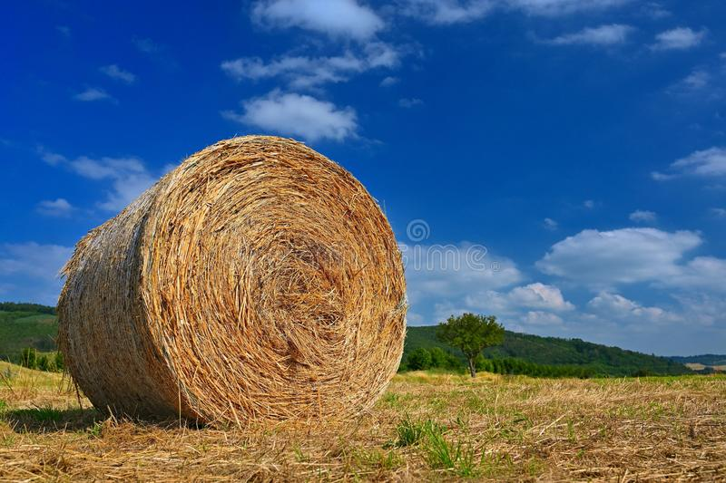 Beautiful summer landscape. Agricultural field. Round bundles of dry grass in the field with bleu sky and sun. Hay bale - haystack stock image