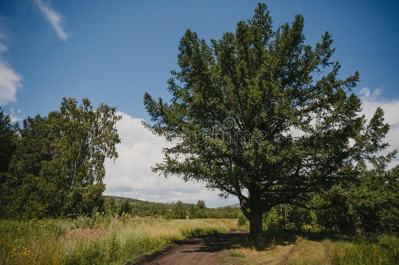 Beautiful summer landscape with a big green tree against the blue sky stock photo