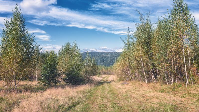 Beautiful summer landscape. Birch grove with mountain road and cloudy sky royalty free stock images