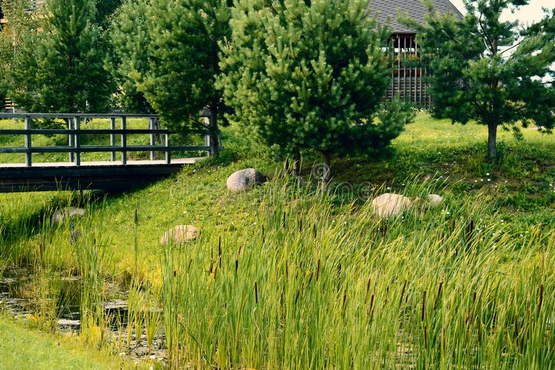 Beautiful summer landscape with canes and a reservoir for background. green fir-trees and wooden bridge stock photo
