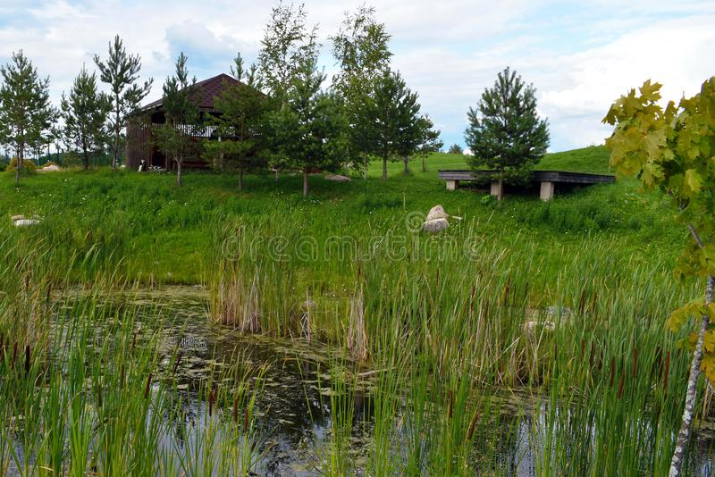 Beautiful summer landscape with canes and a reservoir for background. canes in swamp, green fir-trees and wooden lodge stock photo