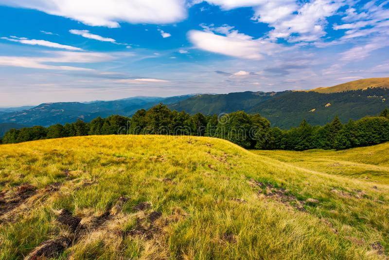 Beautiful summer landscape of Carpathians stock photos
