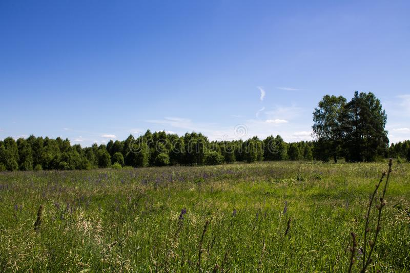 Beautiful summer landscape field with green grass and trees against clear blue sky stock images