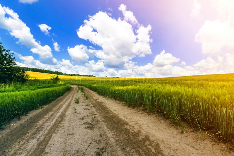 Beautiful summer landscape with fresh green grass, dirt gravel road, blue sky and white puffy clouds. Path through crop fields. royalty free stock image