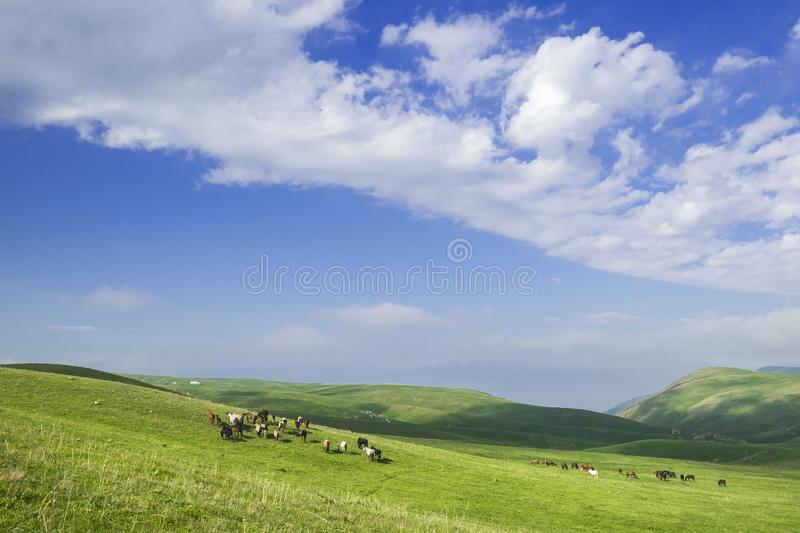 Beautiful summer landscape, green hills with horses grazing stock image
