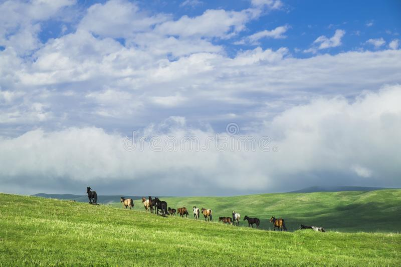 Beautiful summer landscape, green hills with horses grazing stock photography
