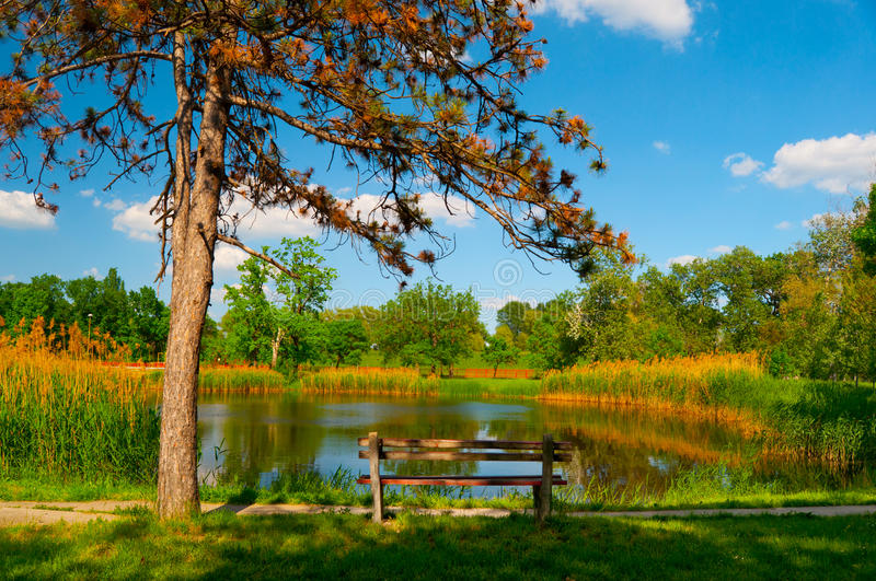 Beautiful summer landscape with lake and wooden bench stock photography
