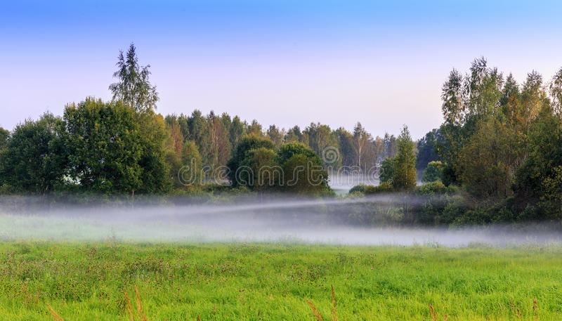 Beautiful summer landscape. Misty early morning in the forest with a green meadow. Latvia royalty free stock photo