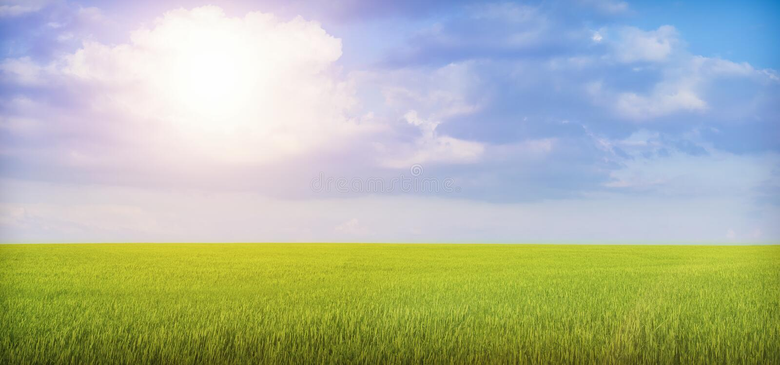 Beautiful summer landscape of nature. Blue sky, grass, wheat and bright sun. Beautiful summer landscape of nature. Blue sky, grass, wheat and bright sun royalty free stock images