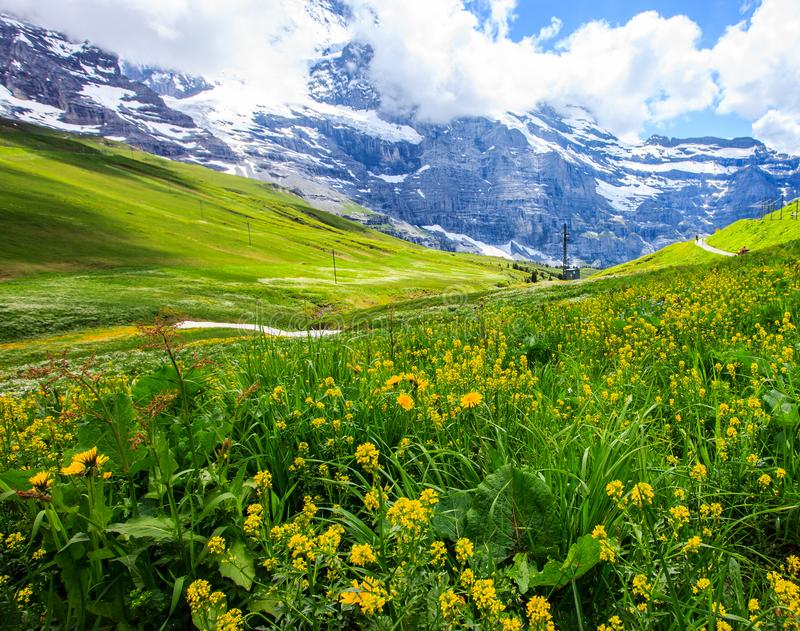 Beautiful summer landscape panoramic view of the yellow wildflower field with majestic colorful Swiss mountain ranges stock photo
