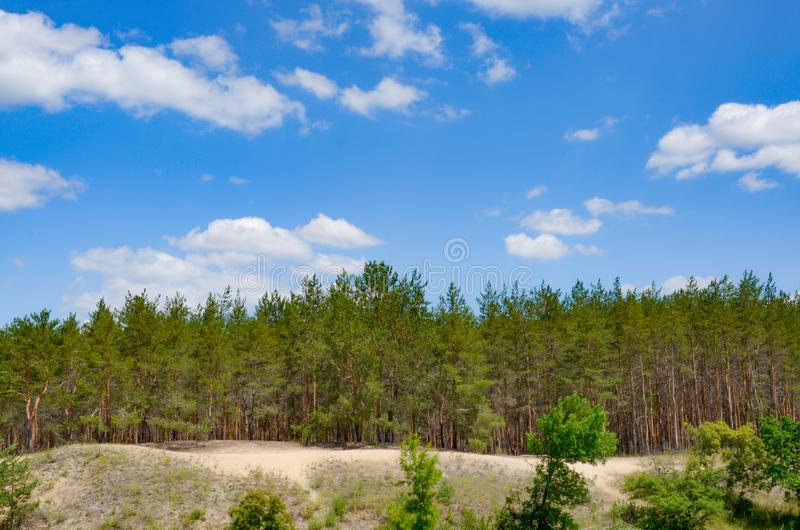 Beautiful summer landscape of pine forest on the sandy shore with blue sky and clouds. Summer, nature, landscape, forest stock photos