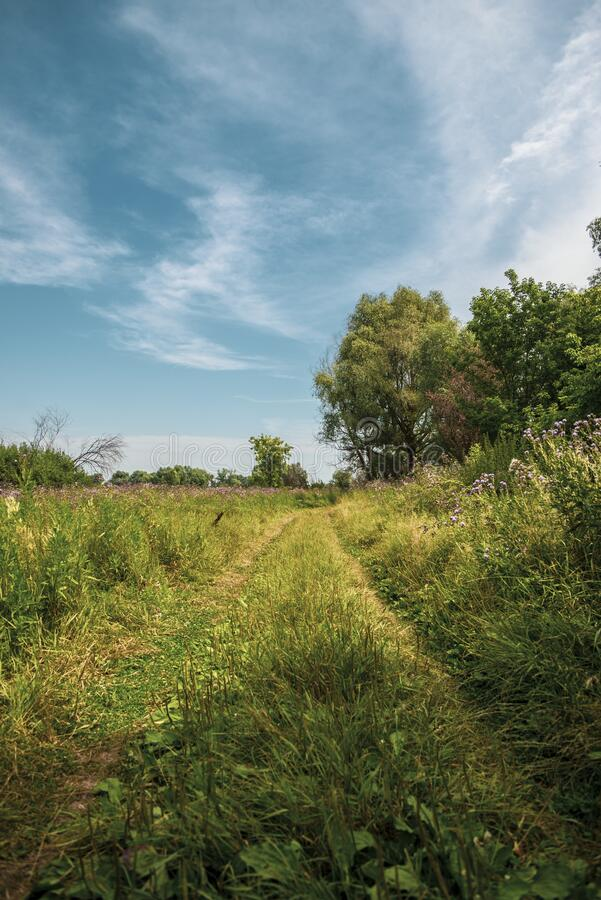 Beautiful summer landscape, rural july scenery royalty free stock images