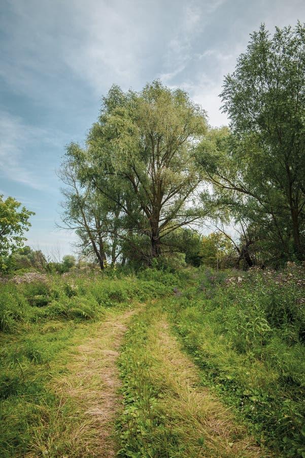 Beautiful summer landscape, rural july scenery royalty free stock photo