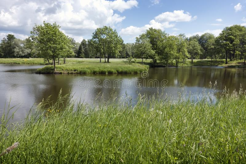 Beautiful summer landscape with trees on the river bank, a meadow and the wood on the horizon.  royalty free stock photography