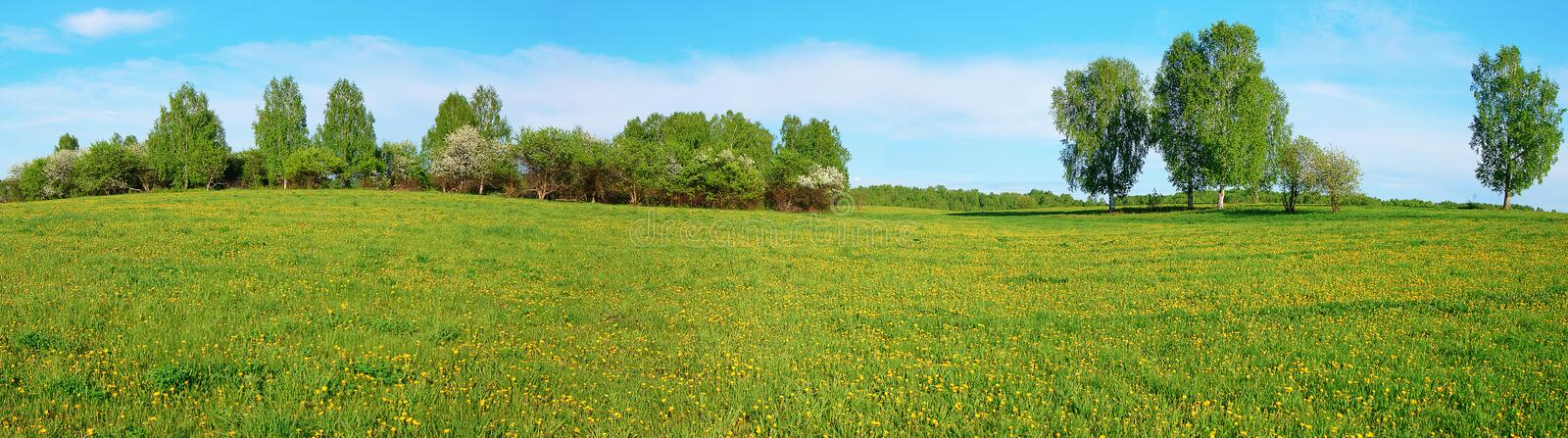 Beautiful summer landscape of a wide green field with yellow dandelions and trees on horizon. Beautiful summer landscape of a wide green field with yellow stock image