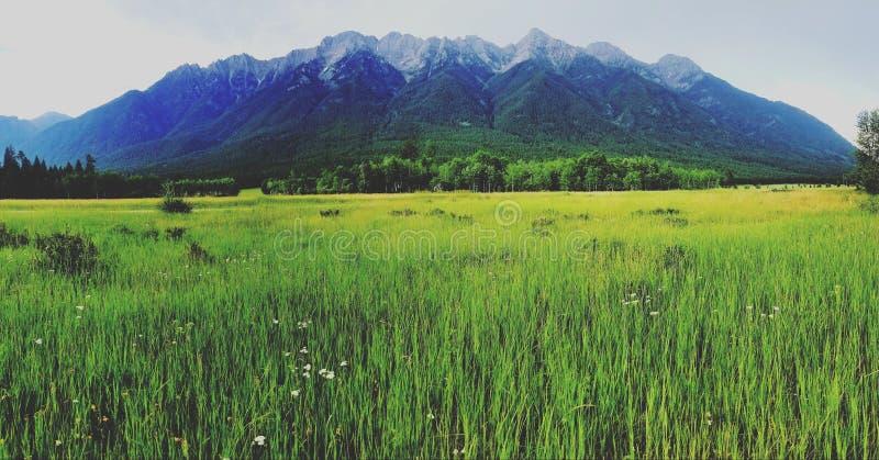 Beautiful summer madness. Mountain, feild royalty free stock image