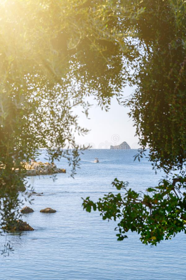 Beautiful summer panoramic seascape. View of the the sea bay with crystal clear azure water. The branches of the old olive tree in royalty free stock image