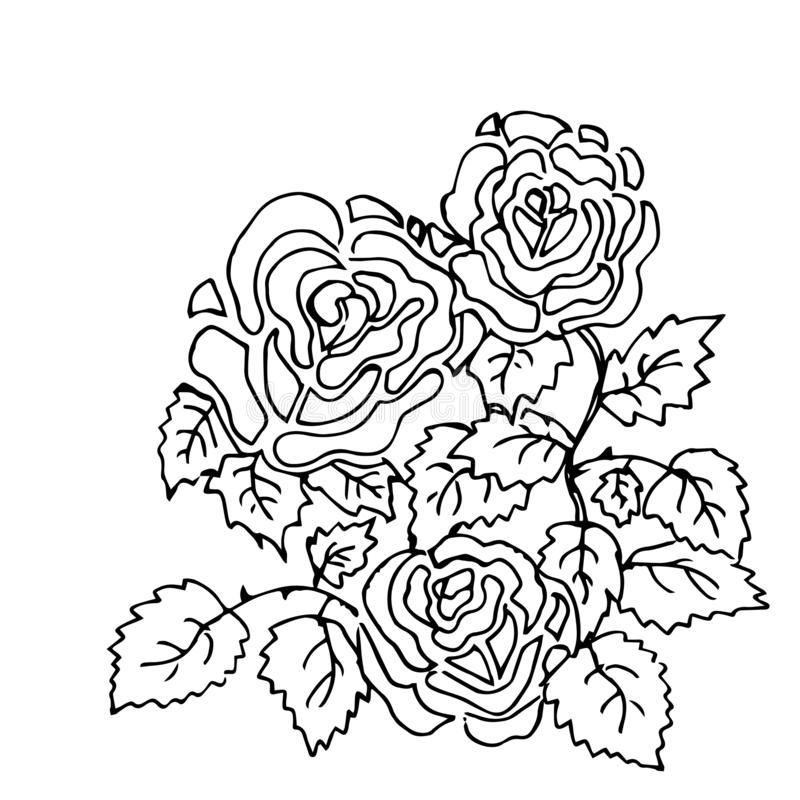 Beautiful summer pattern of flowers. Decoration from roses on a white background. Color book. Fashion in a vector illustration. Beautiful summer pattern of stock illustration
