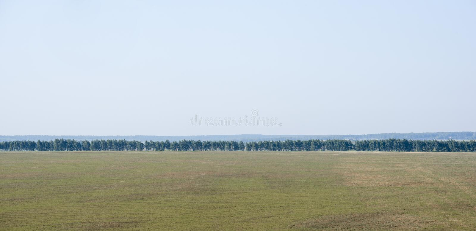 Beautiful summer rural natural landscape with a long row of trees. On the horizon royalty free stock images