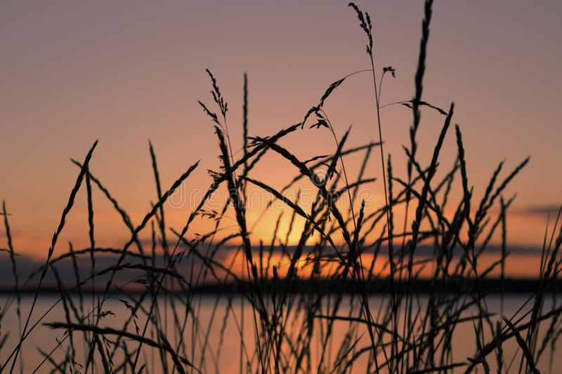 Beautiful summer scene with reed plants and sunset in the background. Travel and holiday concept. Beautiful summer scene with reed plants and sunset in the stock photography