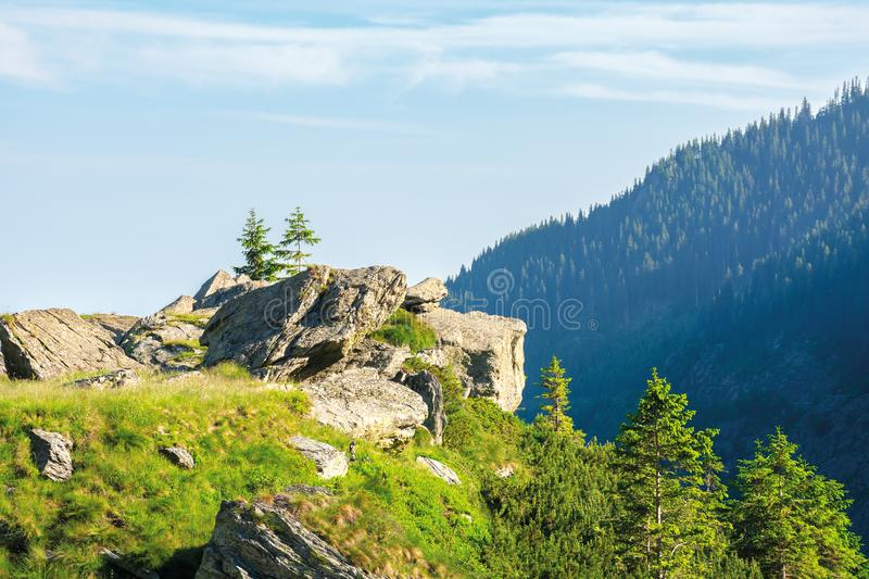 Beautiful summer scenery of fagaras mountains. Spruce trees on the huge boulders on the grassy steep slope. sunny weather with clouds on the blue sky stock photos