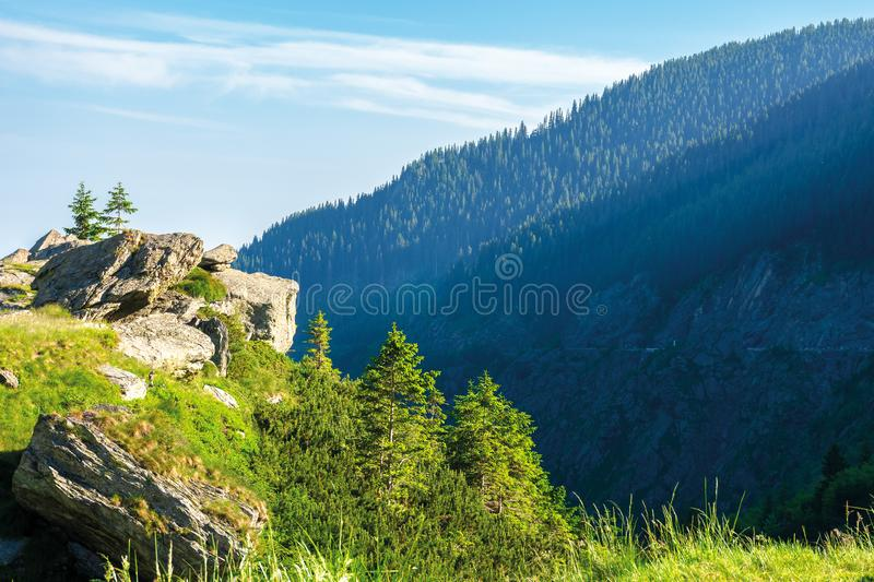 Beautiful summer scenery of fagaras mountains. Spruce trees on the huge boulders on the grassy steep slope. sunny weather with clouds on the blue sky stock image
