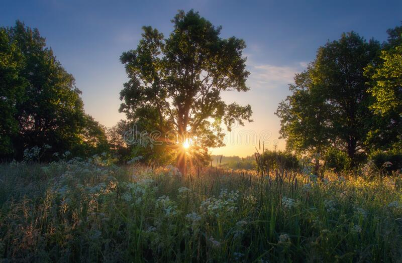 Beautiful summer scenery royalty free stock image