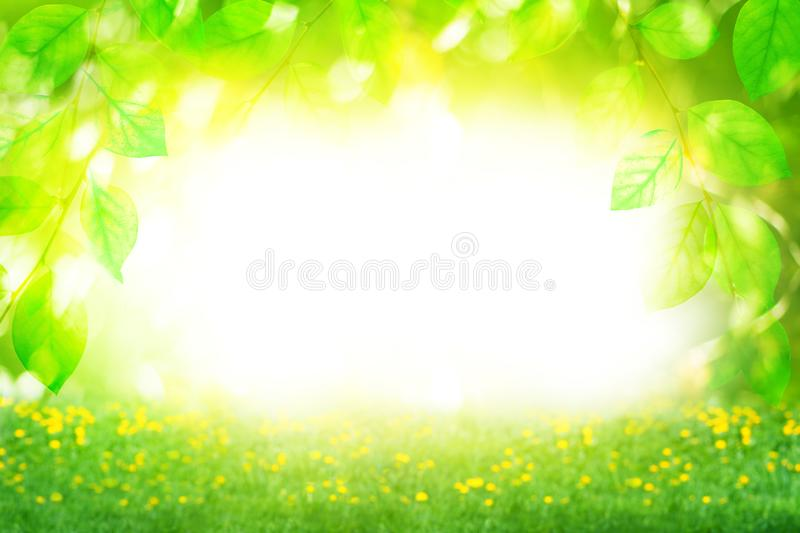 Beautiful summer sunny day landscape, green leaves branches and flowers field on bright blurred bokeh background close up royalty free stock photography