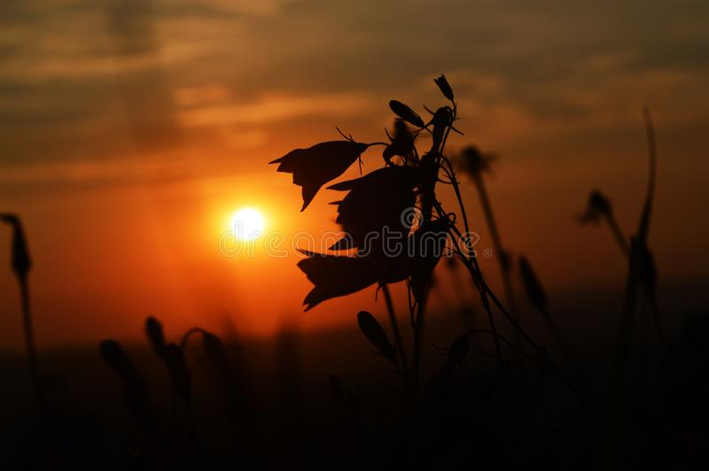 Magical end of the sunny day in beautiful nature royalty free stock images