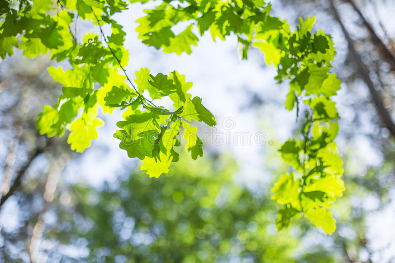 Beautiful summer tree stock images
