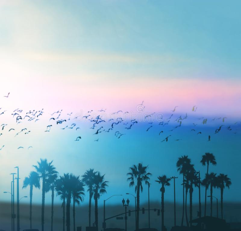 Beautiful summer vibes in Los Angeles. Blurred background royalty free stock image