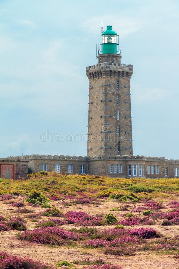 Phare du Cap Fréhel. Beautiful summer view of the lighthouses at Cap Fréhel in Brittany, France, with vibrant heather flowers Calluna vulgaris and common stock photos