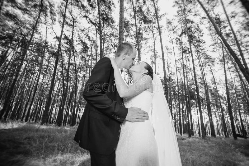 Beautiful summer Wedding walk on nature royalty free stock image
