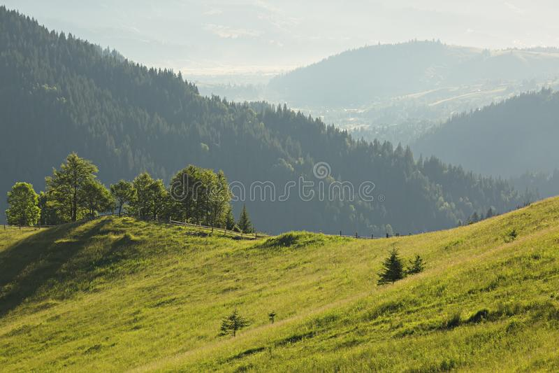 Beautiful summertime mountain landscape with several trees in th stock image