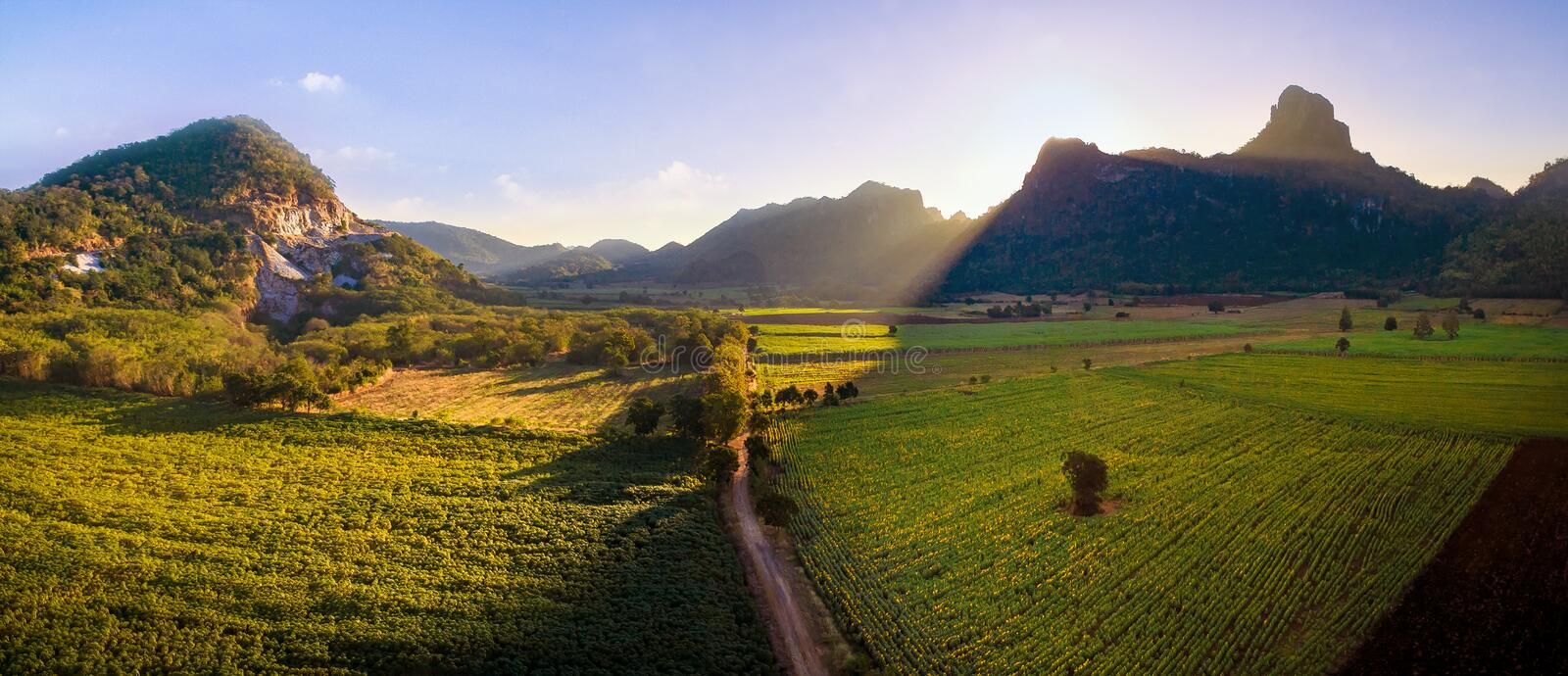 Beautiful sun light on sunflowers and agriculture field in lime stock photography