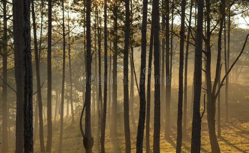 Beautiful sun rays in the forest background at sunrise part 2 stock photo