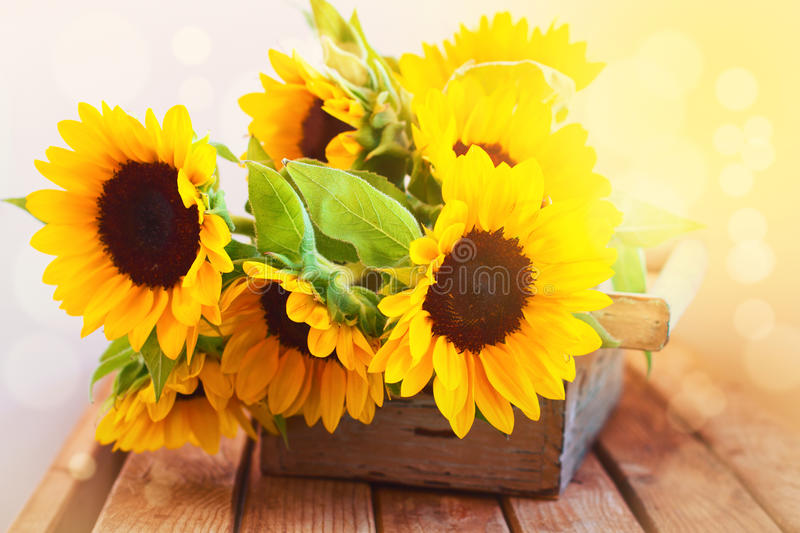 Download Beautiful Sunflower Bouquet In Wooden Box Stock Image - Image: 26849859