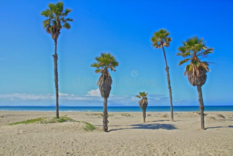 Mandalay Bay Beach Oxnard California Palm trees. Beautiful sunny blue sky California day on beachfront of Mandalay Bay Oxnard California royalty free stock photography