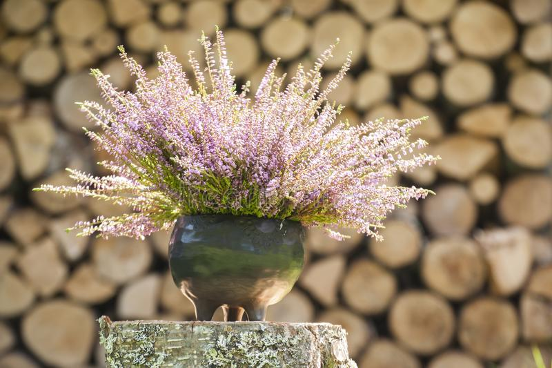 Beautiful sunny closeup of wild heater blossoms in unique handmade black pottery planter in sunlight and firewood on background. Autumn mood with beautiful stock photo
