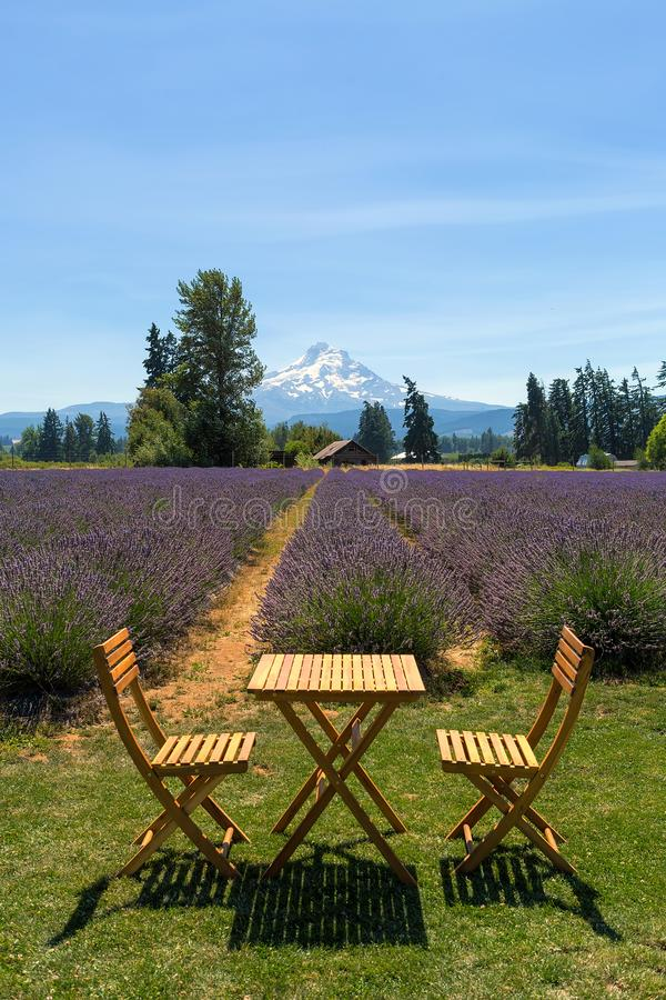Beautiful Sunny Day at Lavender Field in Oregon. Beautiful sunny blue sky day at Lavender field in Hood River Oregon during summer season stock photography