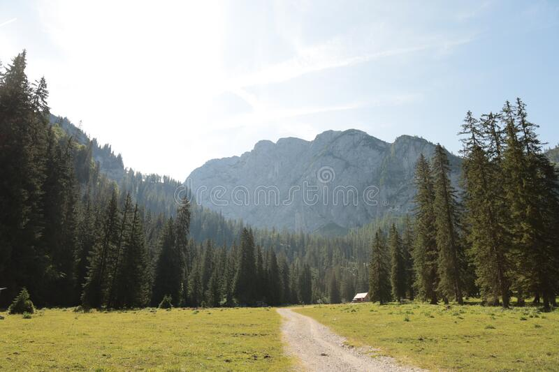 Beautiful sunny day is in mountain landscape. Alps Austria.  stock photos